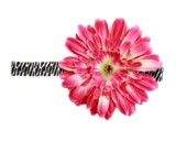 Black White Zebra Flowerette Burst with Candy Pink Daisy